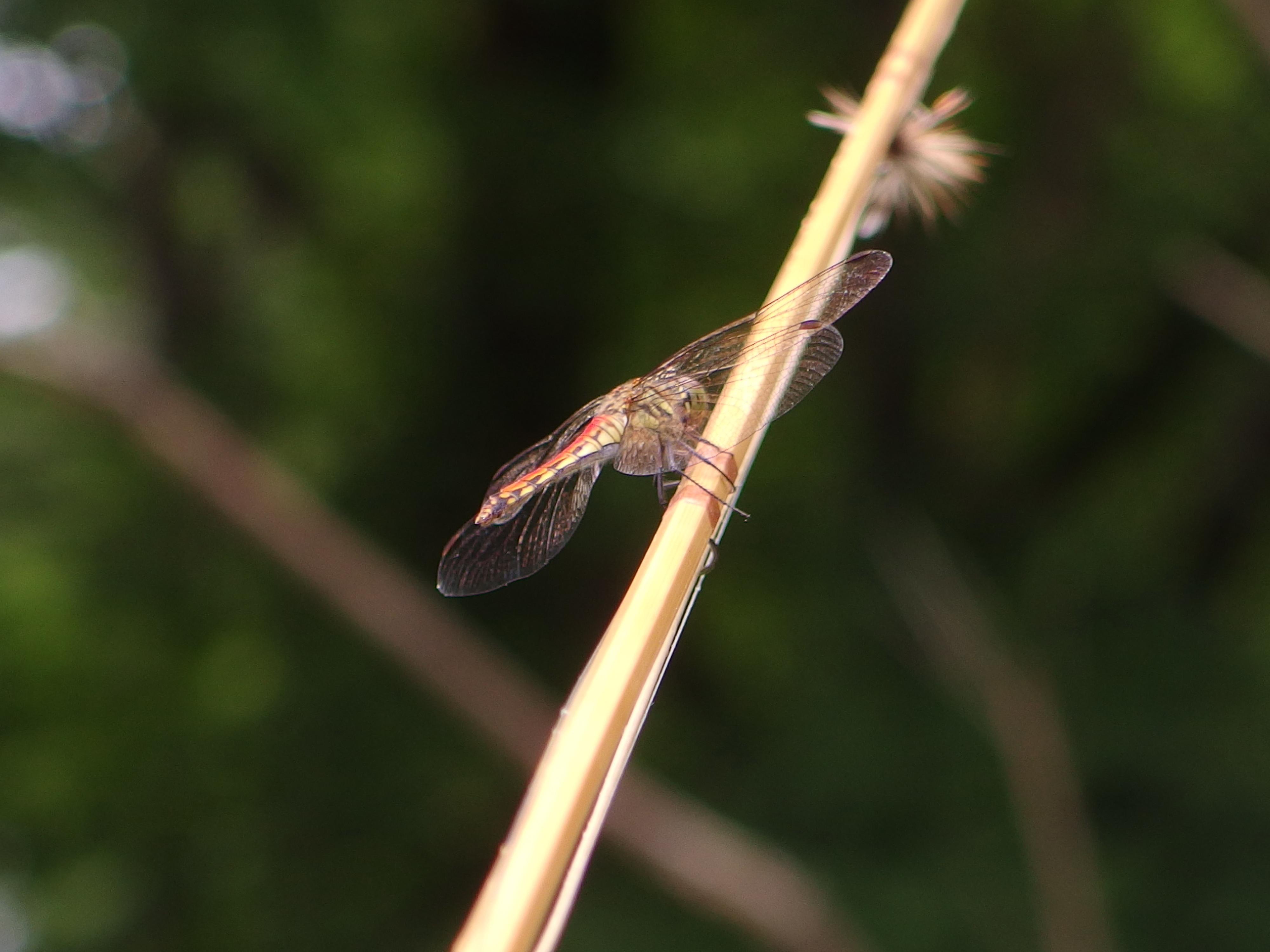 北海道の河原では蜻蛉が夏の終わりを告げている。