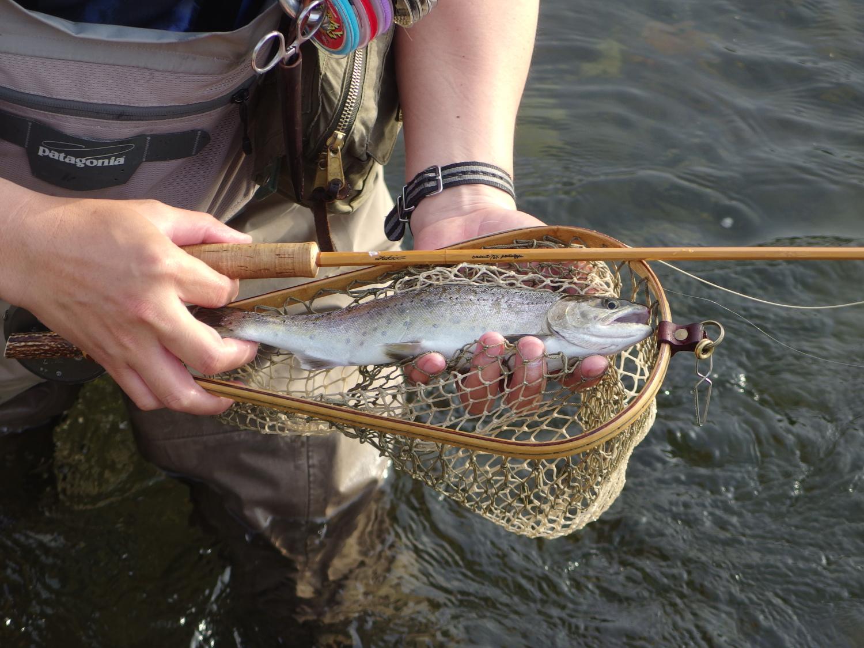 会期中にもいそいそと川へ出かけて行きます。渡良瀬川の尺山女魚を杉戸さんがキャッチ。