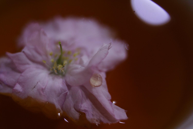 五月も終盤に差し掛かる頃、庭の八重桜が満開になりました。