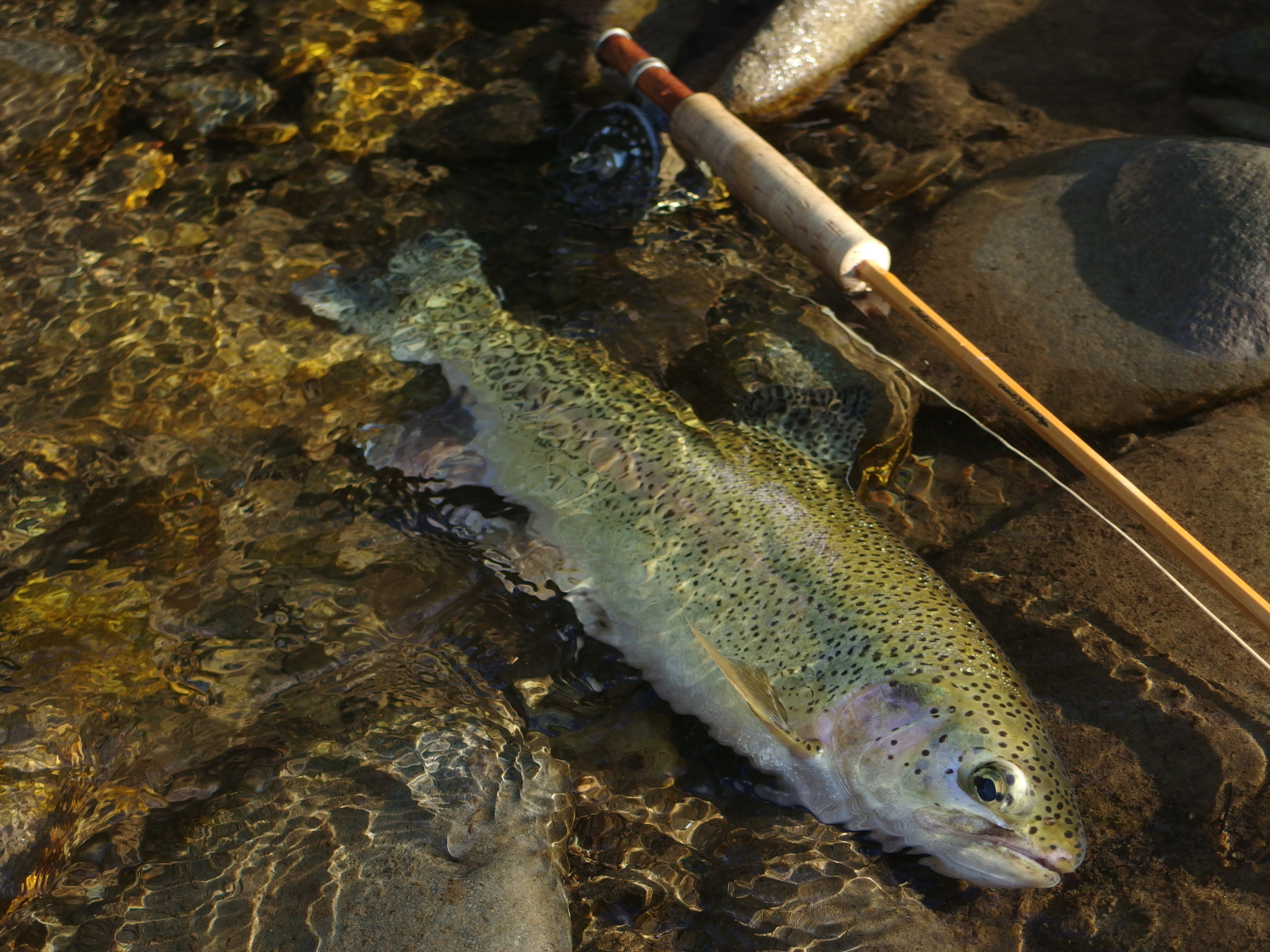 05:12pm Northern Hokkaido, Japan / Water temperature: 15.5℃ / Hatch: caddis/ Fly: CDC caddis #16
