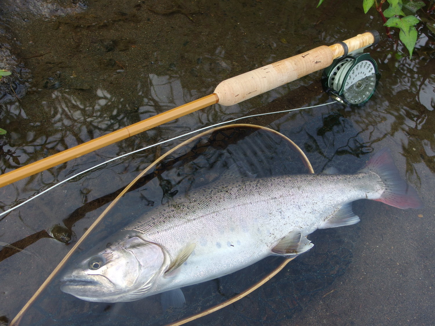09/Aug Nagano, Japan / Water temperature: – / Hatch: -/ Fly: PMD Spent #18