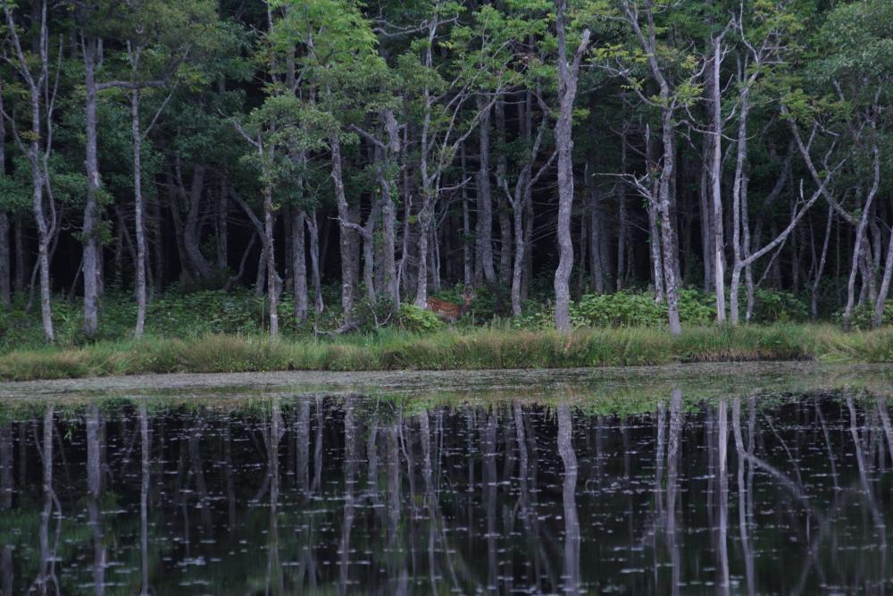 知床五湖を巡ったり。